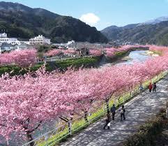japan cherish 1